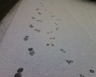 Foot and pawprints